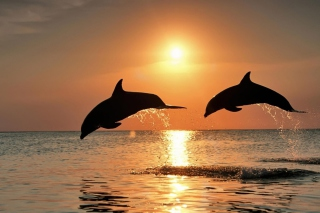 Dolphins At Sunset - Obrázkek zdarma pro Samsung Galaxy Tab 3