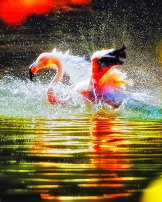 Flamingo Splash - Obrázkek zdarma pro Nokia 206 Asha