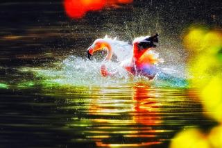 Flamingo Splash - Obrázkek zdarma pro Samsung Galaxy Note 2 N7100
