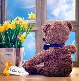 Teddy Bear with Bouquet - Obrázkek zdarma pro 1024x1024