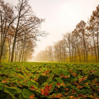 Autumn leaves fall - Obrázkek zdarma pro iPad mini 2