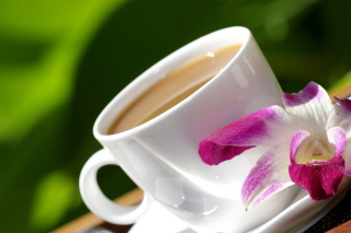 Orchid and Coffee Background for Android, iPhone and iPad