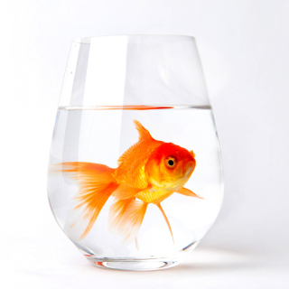 Goldfish in Glass - Obrázkek zdarma pro 128x128