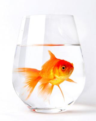 Goldfish in Glass - Obrázkek zdarma pro Nokia Asha 308