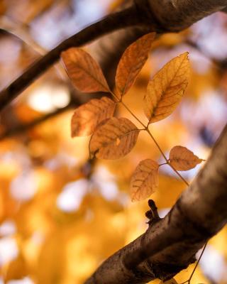 Yellow Macro Autumn Leaves - Obrázkek zdarma pro Nokia Lumia 920T
