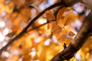 Yellow Macro Autumn Leaves Wallpaper for Android, iPhone and iPad