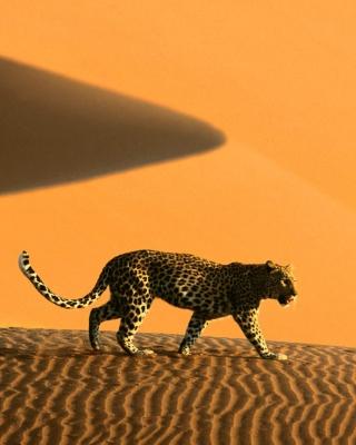 Cheetah In Desert - Obrázkek zdarma pro Nokia X1-01