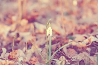 Обои Spring Flower для андроид