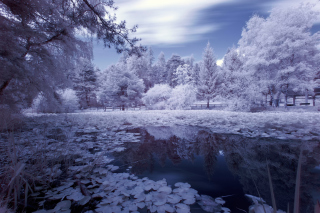 Frozen Pond Picture for Android, iPhone and iPad