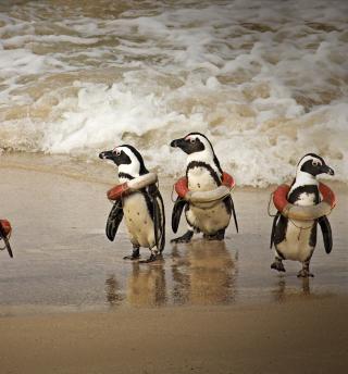 Funny Penguins Wearing Lifebuoys - Obrázkek zdarma pro 320x320