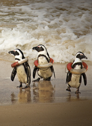 Funny Penguins Wearing Lifebuoys - Obrázkek zdarma pro Nokia Lumia 925