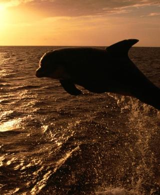Dolphin - Ocean Life - Obrázkek zdarma pro Nokia Asha 305