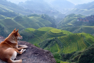 Free Dog Looking Down At Green Hills Picture for Android, iPhone and iPad