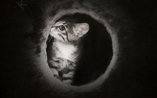 Free Black And White Kitten Picture for Android, iPhone and iPad