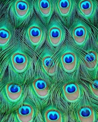 Peacock Feathers - Obrázkek zdarma pro Nokia Asha 311