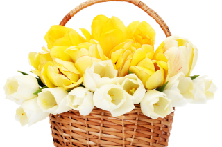 Spring Tulips in Basket Wallpaper for Android, iPhone and iPad