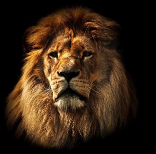 Lion - Obrázkek zdarma pro 2048x2048