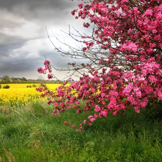 Spring Field - Obrázkek zdarma pro iPad Air