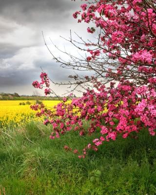Spring Field - Obrázkek zdarma pro iPhone 3G
