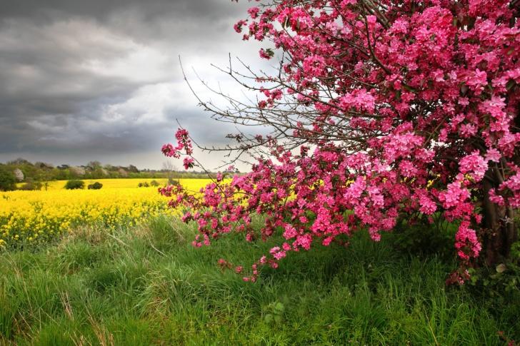 Spring Field wallpaper