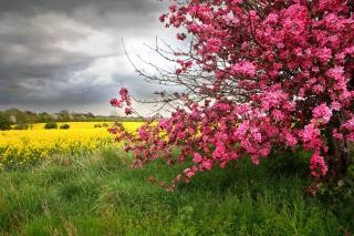 Spring Field - Obrázkek zdarma pro 1080x960