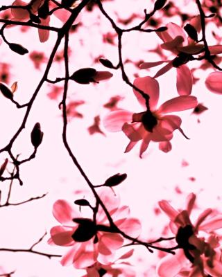 Magnolia Twigs - Obrázkek zdarma pro Nokia Lumia 520