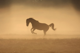 Mustang In Dust Picture for Android, iPhone and iPad
