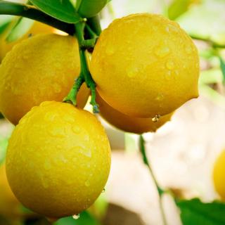 Lemon Drops - Obrázkek zdarma pro iPad 3