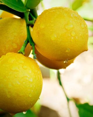 Lemon Drops - Obrázkek zdarma pro Nokia X2