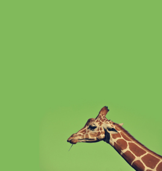 Giraffe - Obrázkek zdarma pro 208x208
