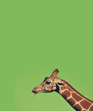 Giraffe - Obrázkek zdarma pro Nokia C7