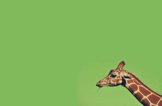 Giraffe - Obrázkek zdarma pro HTC Hero