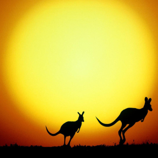 Kangaroo At Sunset - Obrázkek zdarma pro 320x320