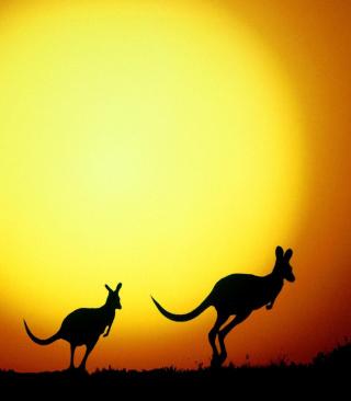 Kangaroo At Sunset - Obrázkek zdarma pro Nokia X2