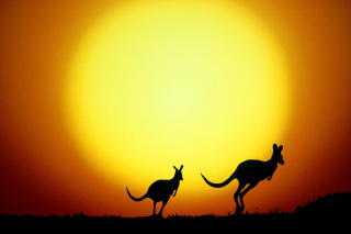 Kangaroo At Sunset - Obrázkek zdarma pro Widescreen Desktop PC 1920x1080 Full HD