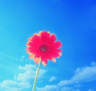 Pink Gerbera - Obrázkek zdarma pro 128x128