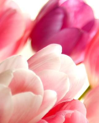 Delicate Tulips Macro Photo - Obrázkek zdarma pro 240x400