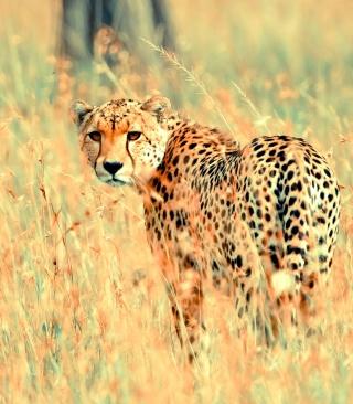 Beautiful Cheetah - Obrázkek zdarma pro 132x176