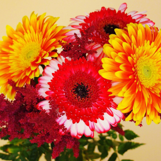 Gerbera Wedding Bouquet - Obrázkek zdarma pro 208x208