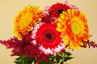 Gerbera Wedding Bouquet Picture for Android, iPhone and iPad