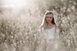 Romantic Girl In Summer Field Picture for Android, iPhone and iPad