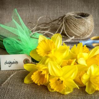 Daffodils bouquet - Obrázkek zdarma pro 208x208
