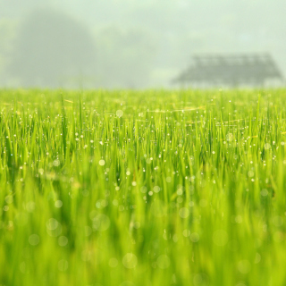 Bokeh Green Grass - Obrázkek zdarma pro 208x208