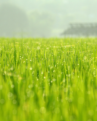 Free Bokeh Green Grass Picture for Nokia Asha 303