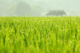 Bokeh Green Grass Wallpaper for Android, iPhone and iPad