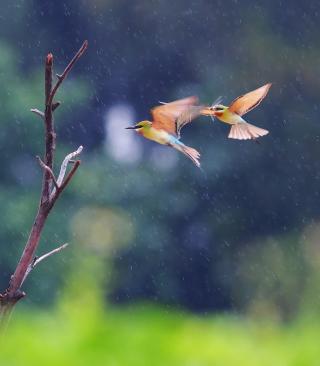 European Bee-eater - Obrázkek zdarma pro 320x480