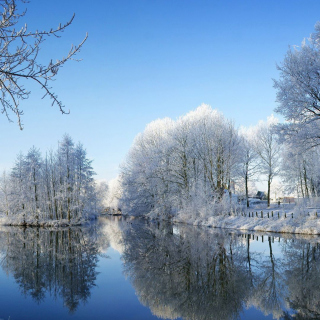 Snowy Forest - Obrázkek zdarma pro iPad 3