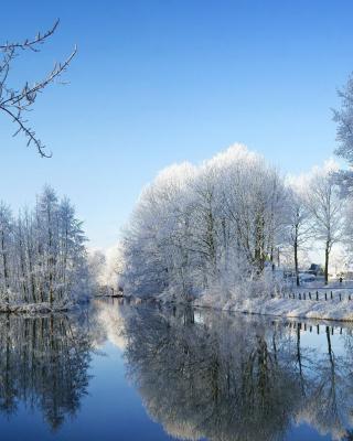 Snowy Forest - Obrázkek zdarma pro 352x416