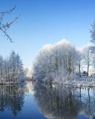 Snowy Forest - Obrázkek zdarma pro Nokia Asha 501