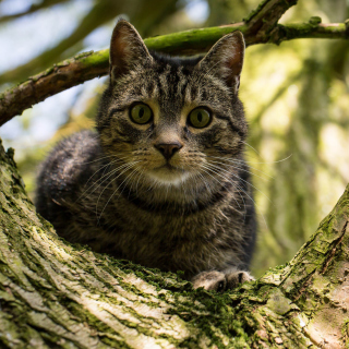 Crazy Cat - Obrázkek zdarma pro 128x128